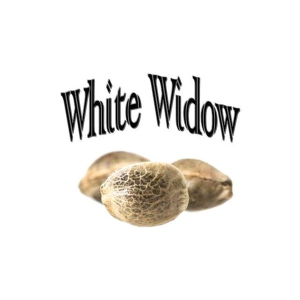 Imagen de White Widow de The Gallery