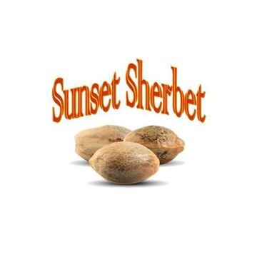 Imagen de Sunset Sherbet de The Gallery