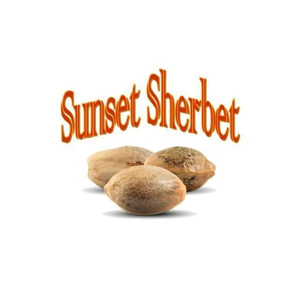 Imagen de Sunset Sherbet de The Gallery