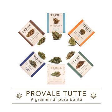 Imagen de PROVALE TUTTE de Terre di Cannabis 6 variedades