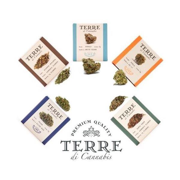 Imagen de PROVALE CINQUE de Terre di Cannabis 5 variedades