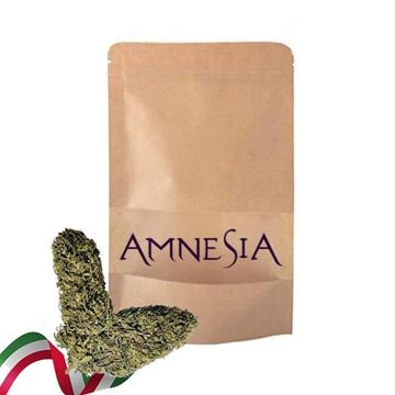Imagen de Flores Amnesia Bio Aroma  - 5gr. 10gr. 20gr. o 30gr.